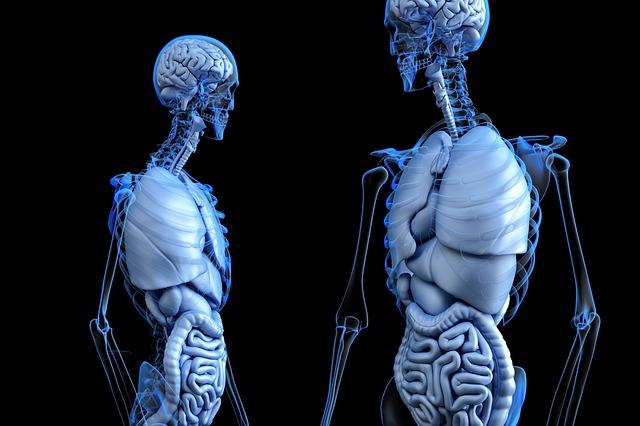 【プロペシアの副作用】腎臓に影響アリ!?本当かどうか調べてみた